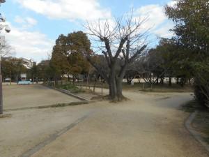 公園の風景です