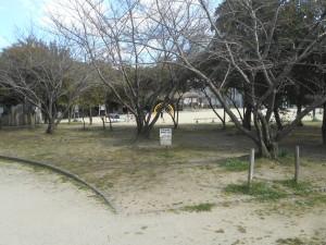 桜の木が並んでいます