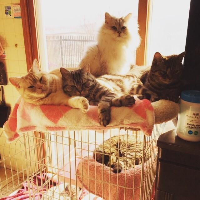 ☆サービスショット(夕焼けと猫たち)