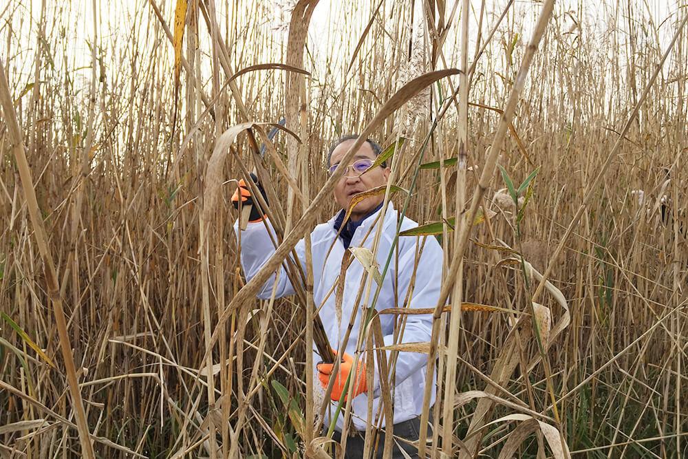 代表の川島も最前線で刈りました