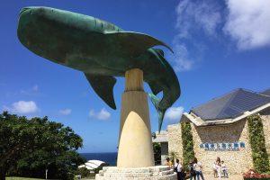 そう!美ら海水族館です!!